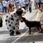 VIDEO: 2014 Makawao Parade and Rodeo Highlights