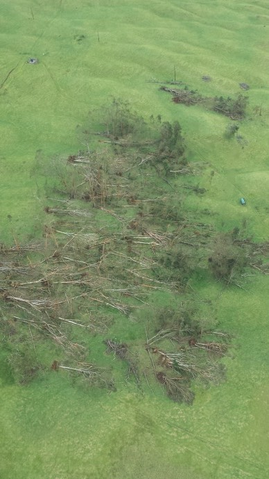 Iselle Storm Damage - Maui. Trees down in Ulupalakua 4:30 p.m. 8/8/14. Photo by Seth Welcker.