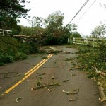 Photo by Seth Welcker.  Trees and electric lines down on the Kula Highway past the ʻUlupalakua General Store block access to transmitter sites for two Pacific Media Group stations that were knocked of the air by the storm. 8/8/14.