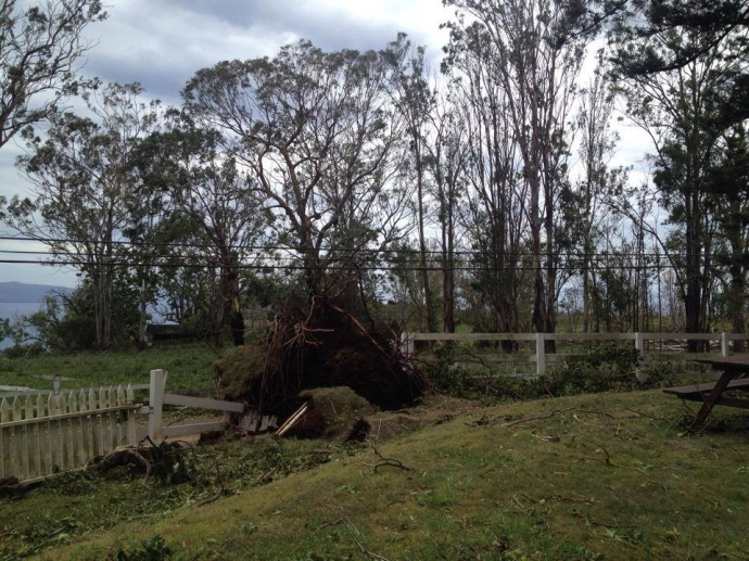 Damage from Iselle at the winery in Ulupalakua. Photo by Heather Miller.
