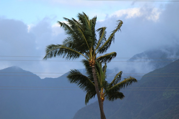 Iselle wind, 8/8/14. Photo by Wendy Osher.
