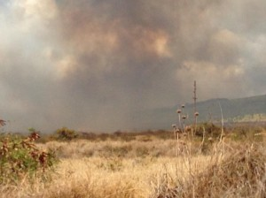 Lahaina brush fire, Sept. 23, 2014. Photo courtesy Tyler Timko.