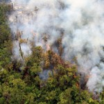 One small portion of the flow front was quite vigorous, with an open stream of lava moving through the forest. Photo courtesy USGS/ Hawaiian Volcano Observatory.