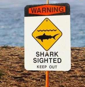 Shark warning sign. Maui Now file photo.