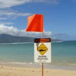 Shark encounter Kahului, file photo by Wendy Osher.
