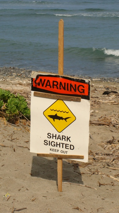 Shark sighting sign. File photo by Wendy Osher.