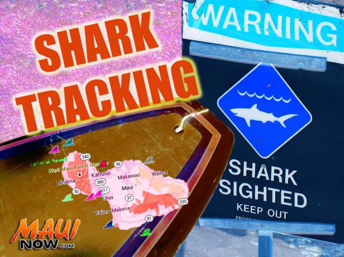 Shark tracking. Graphics by Wendy Osher/Maui Now. Map courtesy Google.