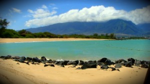 Kanahā. File photo by Wendy Osher.