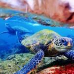 Under the Sea: Maui Naturalist Finds Beauty Below