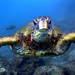 Navy Training ViolatesOcean Wildlife Protection Laws
