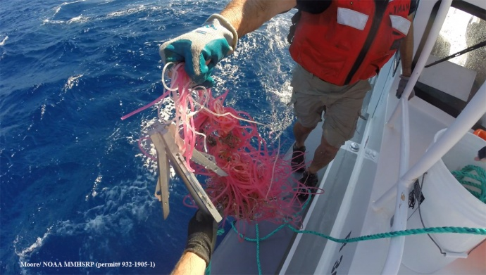 Cutting grapple with gear recovered from entangled whale. (Courtesy of J. Moore - NOAA Fisheries MMHSRP permit # 932-1905)