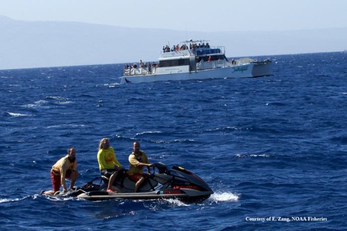 Maui County Ocean Safety Life Guards standing by for support. (Courtesy of E. Zang- NOAA Fisheries MMHSRP permit # 932-1905)