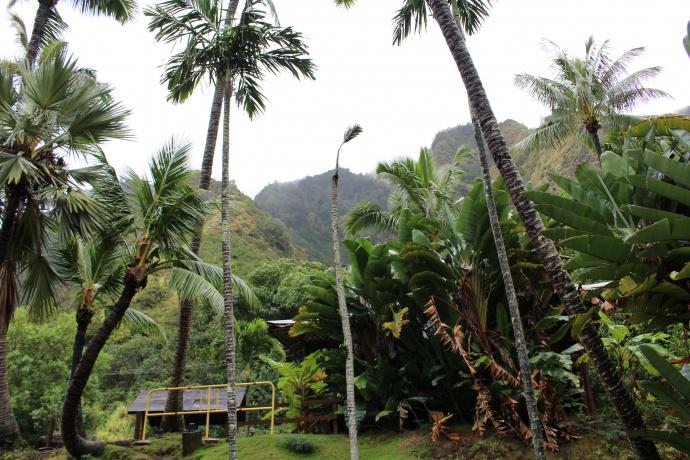 ʻĪao Valley rain 12/23/14.