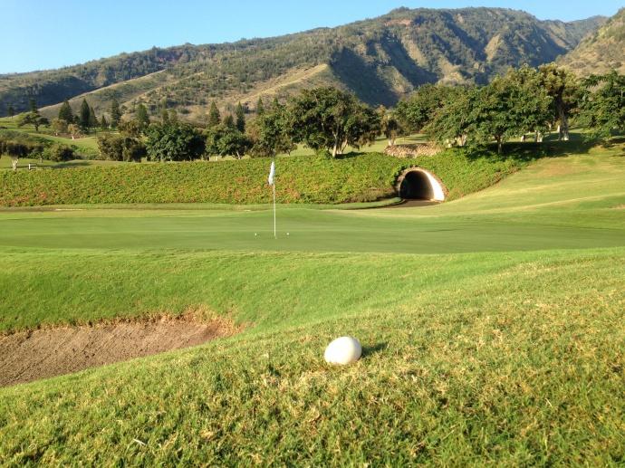 Nēnē goose egg near the 5th green at The King Kamehameha Golf Club.  Photo by: Rick Castillo.