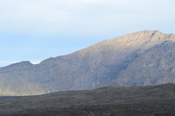 GPS photo of the pine locations. Photo courtesy Haleakalā National Park.
