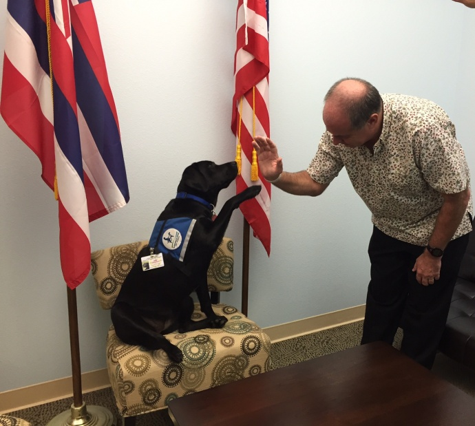 Hawaii Prosecutor's Office and Courthouse Dog Faith - Faith is a two year-old black Labrador who works full time assisting Mitch Roth and the Hawaii Prosecutor's Office. She provides courage and comfort to children who are victims of crime and helps them to find their voice through the difficult legal process.  Next year, Hawaii will become the first state in the country to have a Courthouse Dog in every jurisdiction.  Photo credit: Ron Dahlquist.