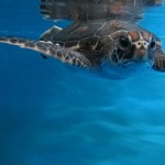 Sea Talk: Turtle Conservation Expedition, Feb. 26
