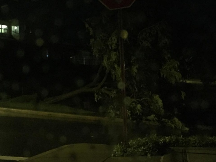 """""""Large tree down at entrance to Hoolea Terrace. Several trees uprooted on Maui Lani Pkwy and at least one tree snapped in half on Kehalani Mauka."""" 1/2/15 - Image: Marie Tesoro"""