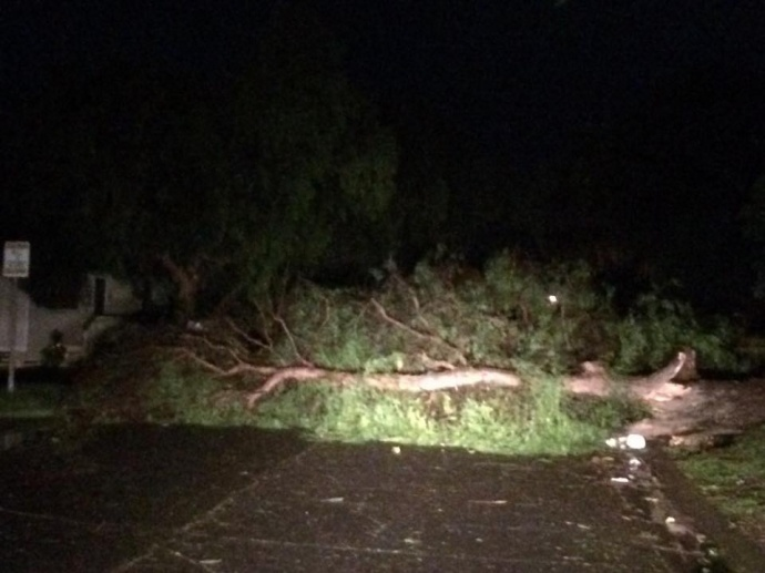 Tree blocking the road in Maui Uplands. 1/2/15 Image: Kathleen Buenger