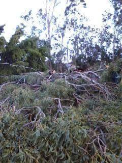 """""""My friends house in Kanaio is under this tree. Completely destroyed from winds last night."""" 1/3/15 - Image: Cindy Craig"""