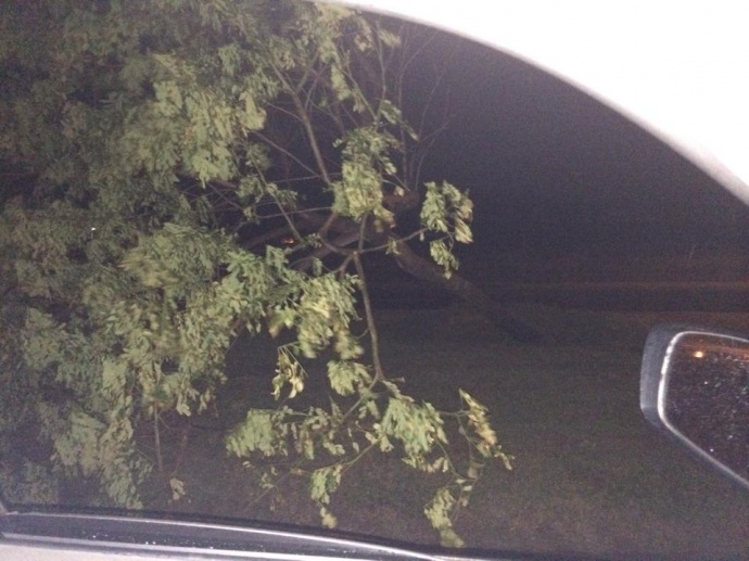 Large tree down fronting Walgreens Wailuku 1/2/15 - Image: Kaleonani Gapero