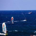 Ho'okipa Whale & Wind Surfers / Image: Jimmie Hepp