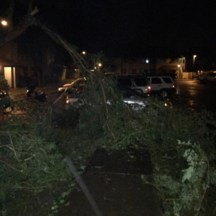 Trees down on Jan. 3, 2016. Photo courtesty Sandy Gonzalez.