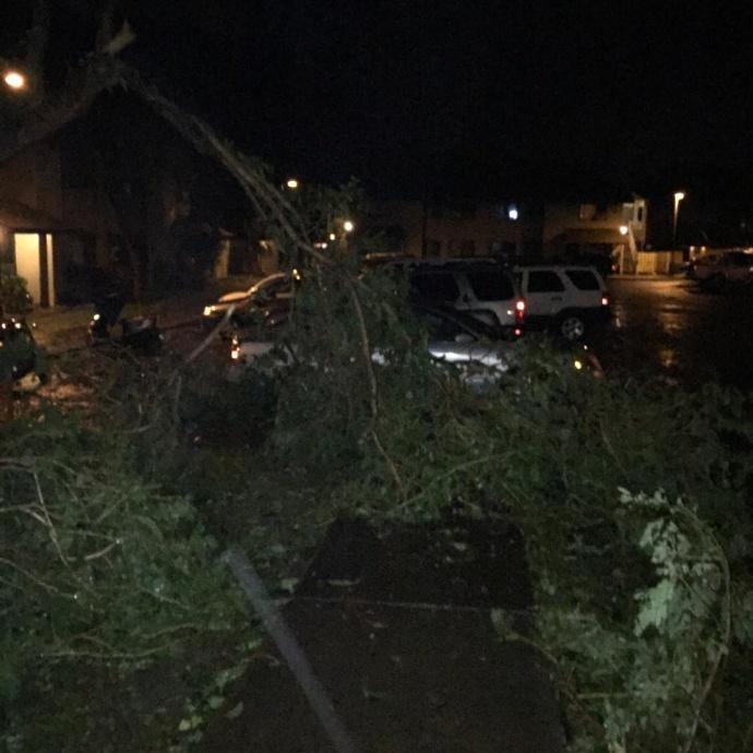 Trees down 1/3/15 - Image: Sandy Gonzalez