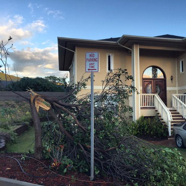 Tree down Maui Lani 1/3/15 - Image: Ka'i Herrick