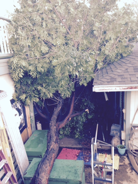 """""""This tree came down on my house at 8:00 p.m. last night"""" 1/2/15 - Image: Ryan Muench"""