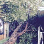 """This tree came down on my house at 8:00 p.m. last night"" 1/2/15 - Image: Ryan Muench"