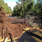 Fallen tree and landslide block Haleakalā National Park road. Courtesy NPS.
