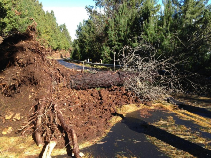 Fallen tree and landslide block Haleakalā National Park road. Courtesy NPS.