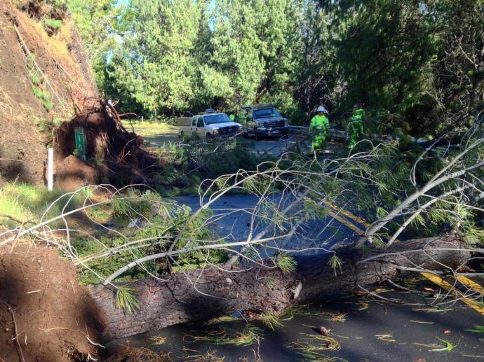 Haleakala National Park Jan 3 2015 tree on road