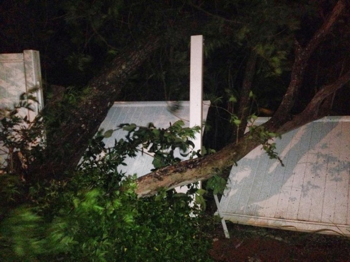 Fence, avocado and guava tree blown over by the wind. 1/2/15 - Image: Janet Valdivia