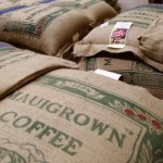 MauiGrown Coffee Gets Starbucks' Certification