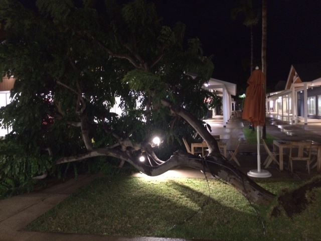Outlets of Maui tree down 1/2/15 - Image: Ryan Beenken