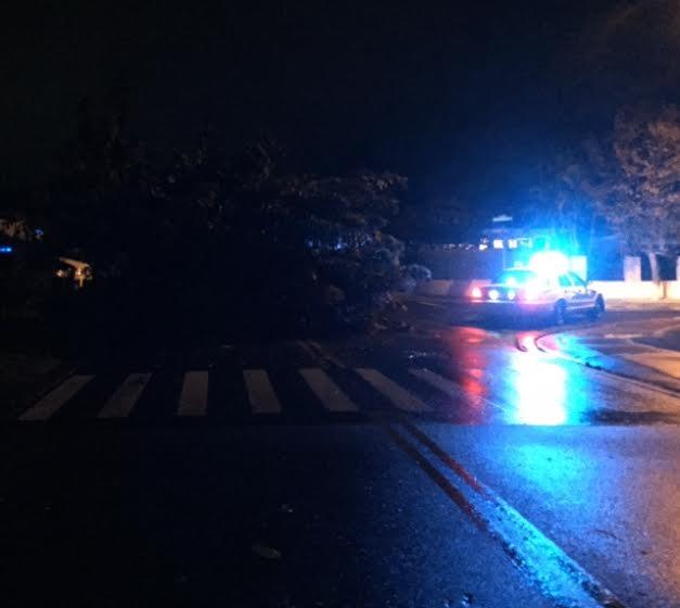 Tree blocking road at Iao loop in Wailuku / Image: Cora Martin