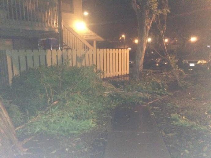 Branches falling in Honokowai / Image: Keali'i Sanchez