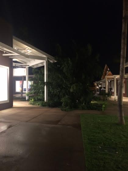 Tree down at Maui Outlets 1/2/15 / Image: Roshelle