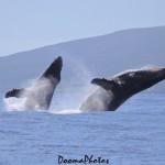 Maui / Image: Dooma Photos