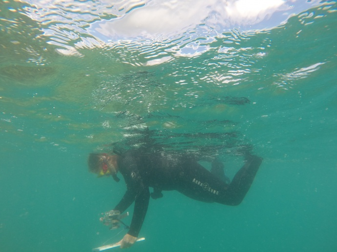 Rapid Response Assessment Team in Kaneohe Bay: Photo courtesy: DLNR.