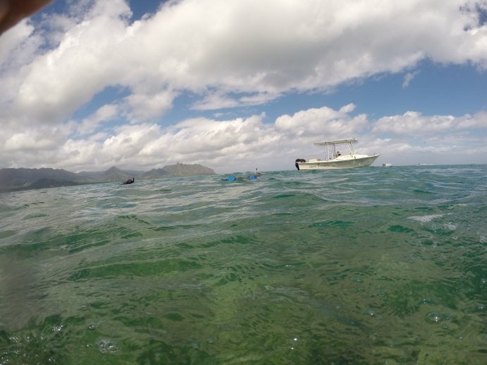 Rapid Response Assessment Team in Kaneohe Bay: Photo courtesy: DLNR.