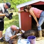 Maui Farm Sanctuary Gets National Exposure on Reality TV