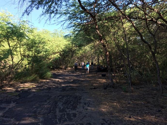 Kiawe forest at Kaloko-Honokōhau. Photo courtesy Peter Young.