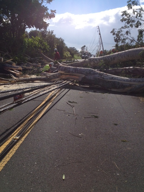 Albizia blocking road and down power lines post storm Feb 2014.  Photo credit Rich Wlosinski-HELCO System Forester.
