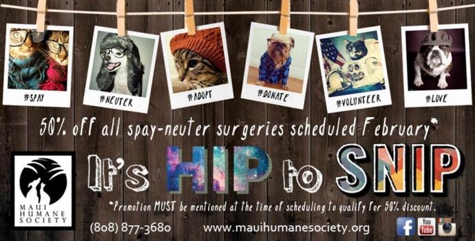 Image courtesy Maui Humane Society.