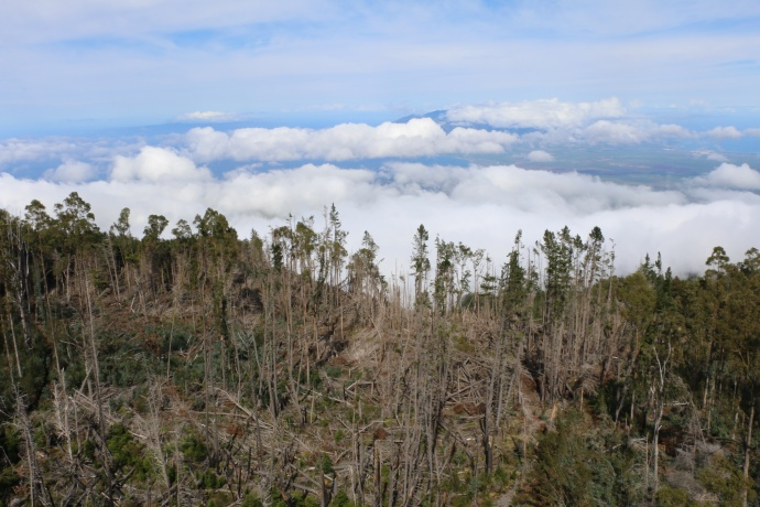 Aerial and ground photographs of Kula Forest Reserve and Polipoli Springs State Recreation Area
