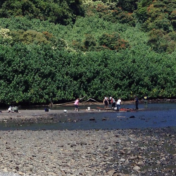 The search for Charli Scott continues at Honomanu. Photo courtesy Brittney Baker, March 22, 2015.