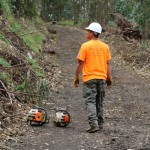 VIDEO: Kula Forest and Polipoli Park to Reopen After Iselle Damage